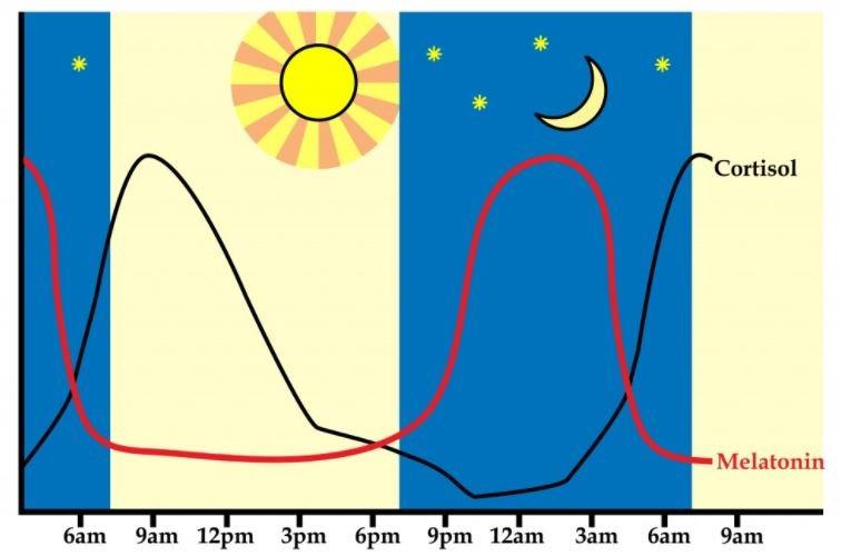 circadianrythm