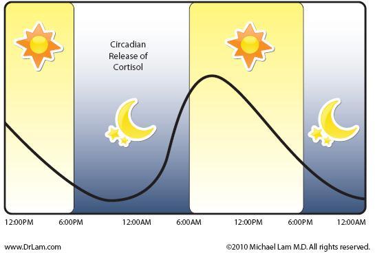 rythme circadien cortisol regime cetogene