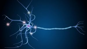 sclérose en plaque regime cetogene