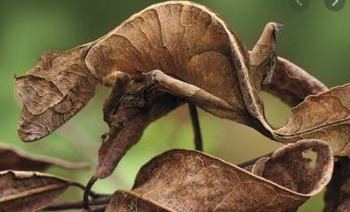 camouflage naturel